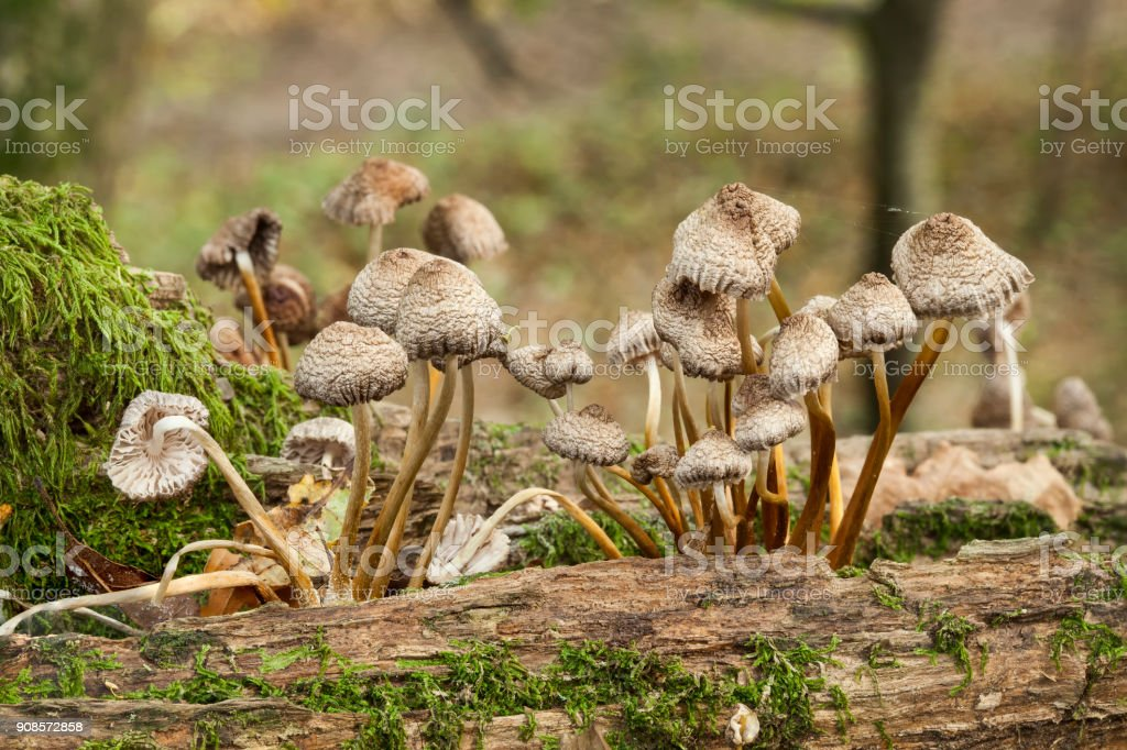 Woodland fungi mushrooms stock photo