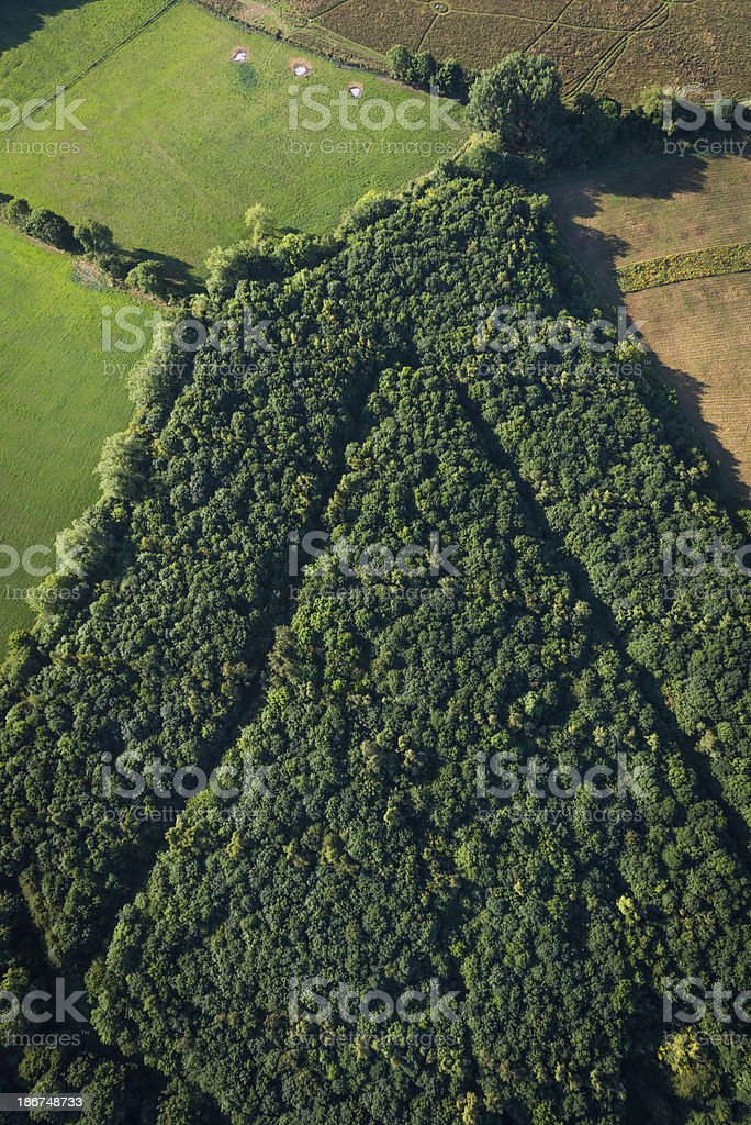 Woodland grove forest arrow shape aerial photograph royalty-free stock photo