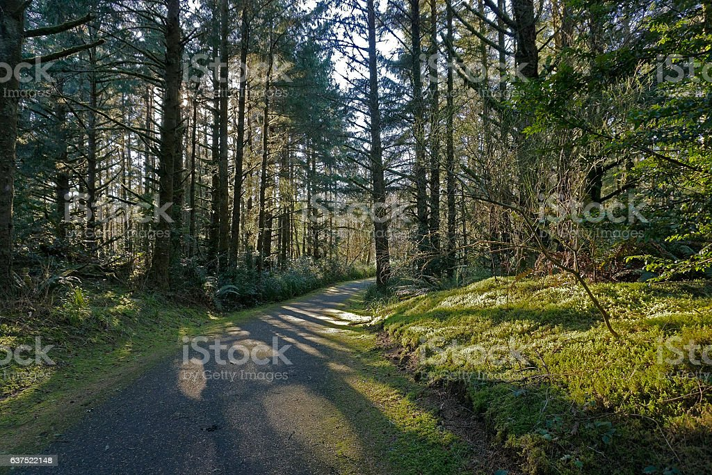 woodland hiking/biking trail stock photo