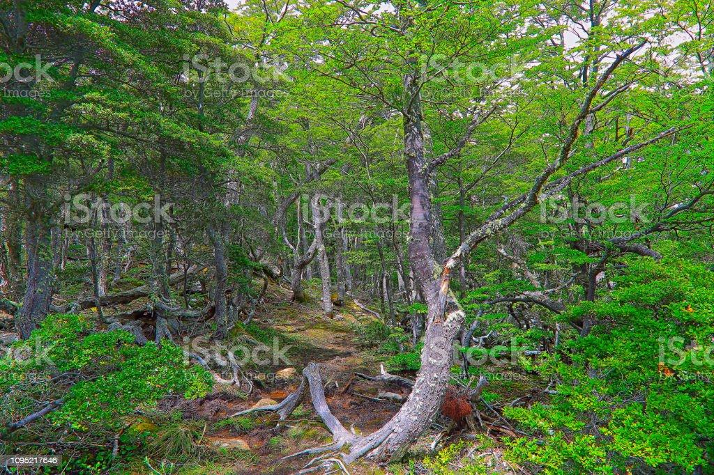 Paisagem de bosques, Ushuaia - Terra do fogo, Argentina-América do Sul - foto de acervo