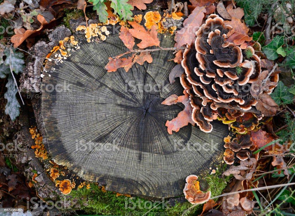 Woodland Mushrooms stock photo