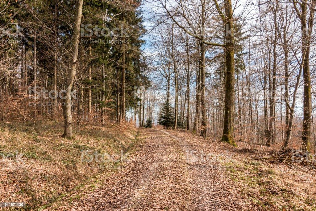Wald-Pfad mitten im Wald – Foto