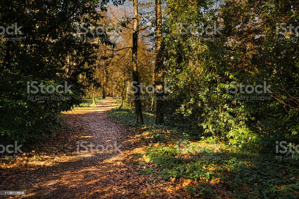 Woodland path stock photo