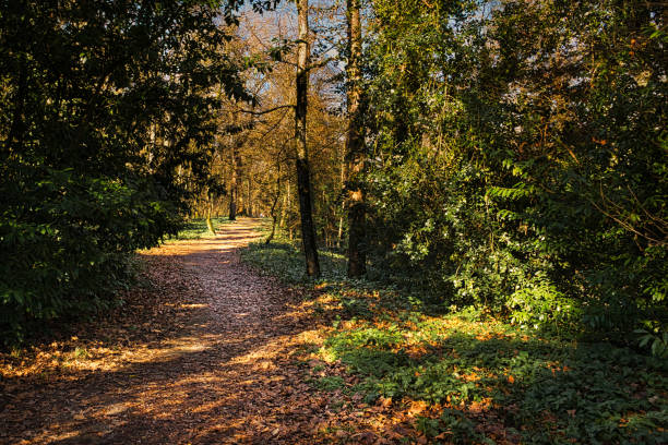 Woodland path stock photo