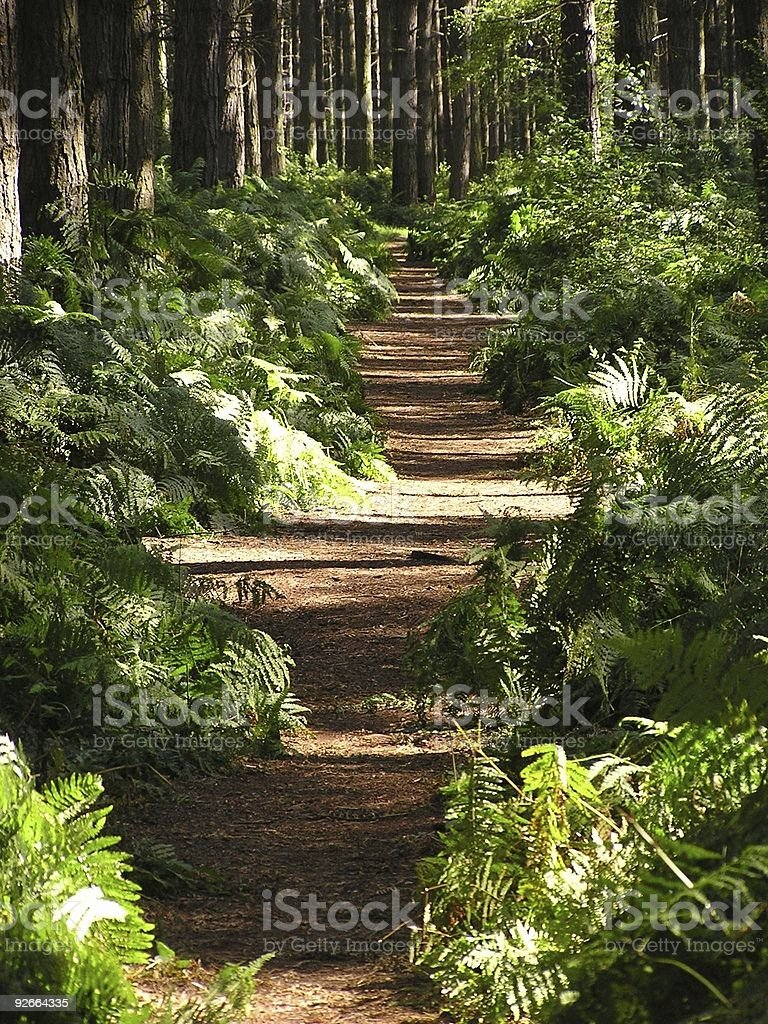Woodland Path royalty-free stock photo