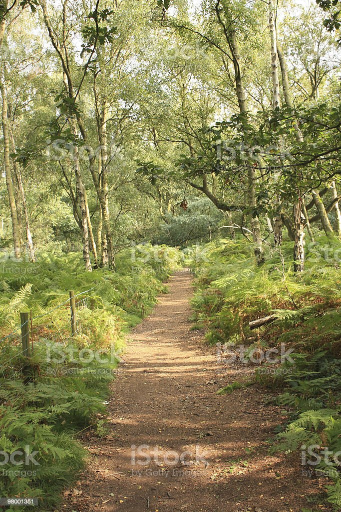 Woodland Path royalty free stockfoto