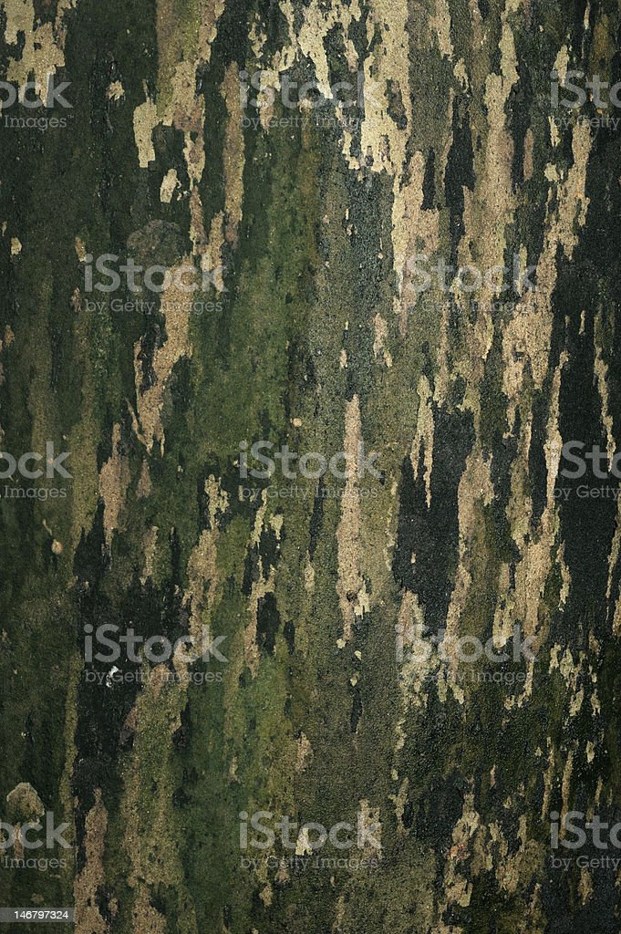 Woodland pattern on concrete wall royalty-free stock photo