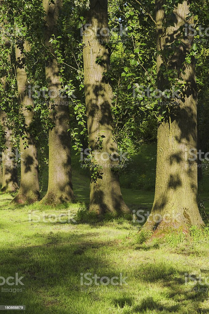 woodland royalty-free stock photo