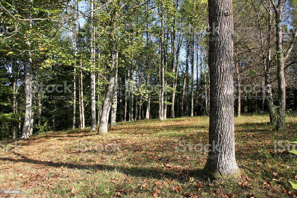 Woodland royalty-free stock photo