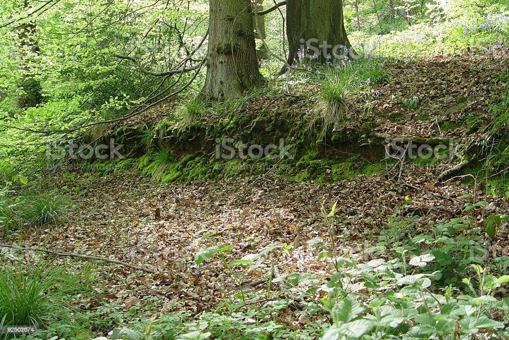 Woodland scene in England royalty-free stock photo