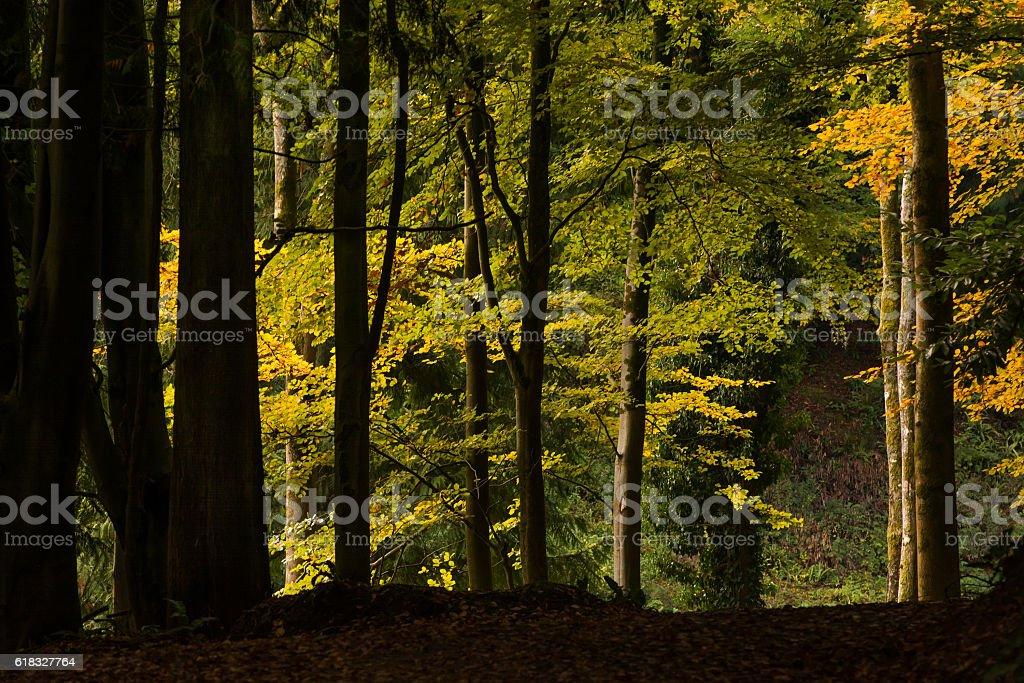 Woodland Scene stock photo