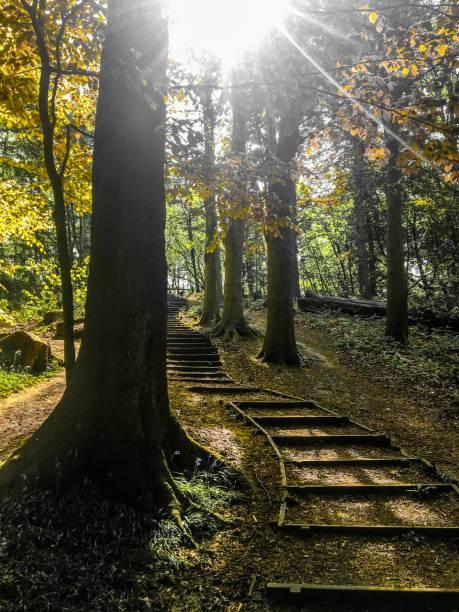 holztreppe - stairway to heaven englische redewendung stock-fotos und bilder