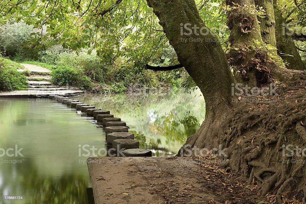 Woodland Stepping Stones stock photo