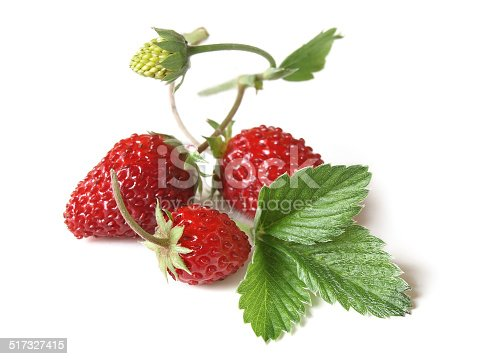 ...also known as Hedge Strawberry, Wood Strawberry