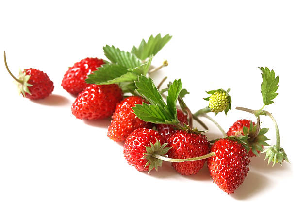 woodland strawberry (fragaria vesca) - wilde aardbei stockfoto's en -beelden
