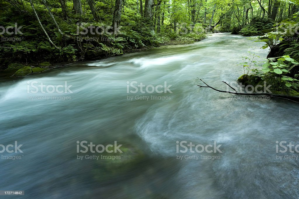 Woodland stream stock photo