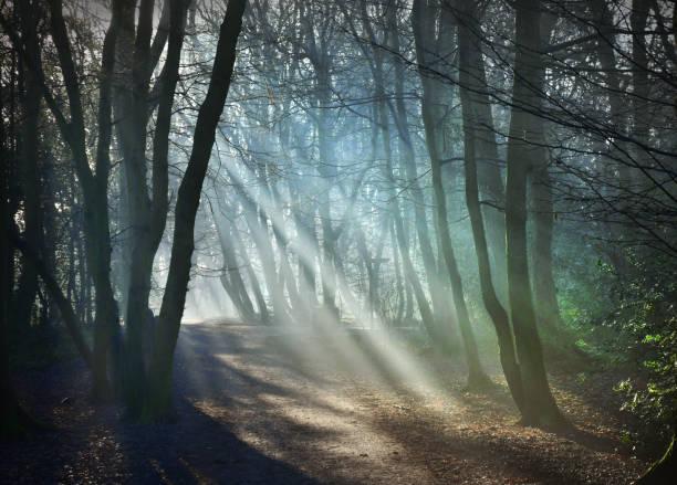 Woodland sunbeams stock photo