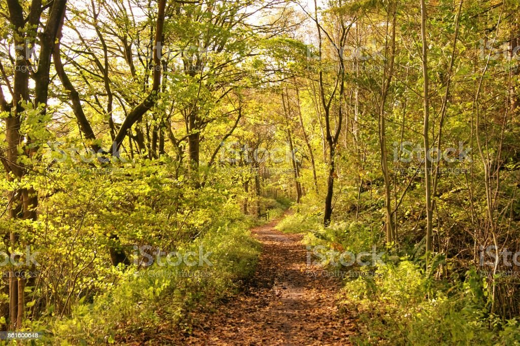 Woodland-Pfad. – Foto