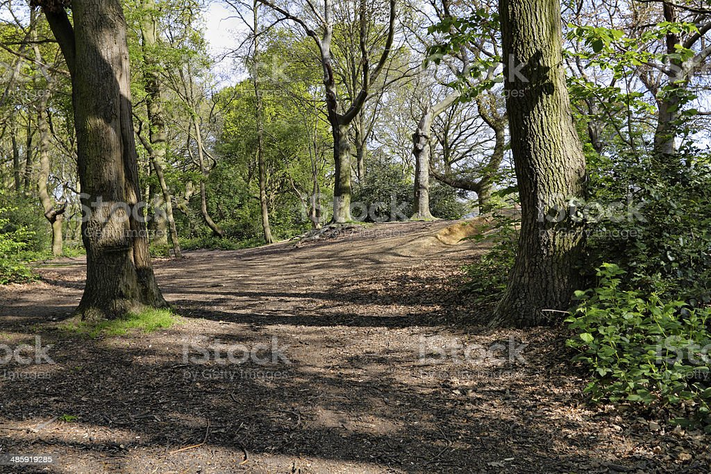 Woodland trees on Tooting Common London stock photo