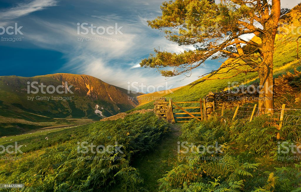 Woodland Walk. Forest walk behind Loweswater in the English Lake District. English Lake District Stock Photo