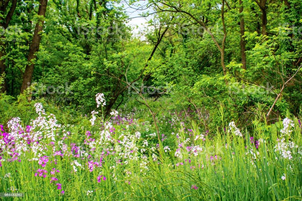 Woodland Wildflowers - Royalty-free Beauty Stock Photo