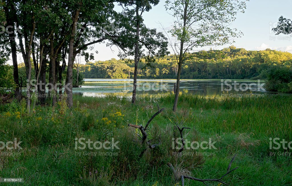 Woodlands and Marshes of Normandale Lake stock photo