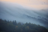 Tree tops on a misty morning in autumn time.