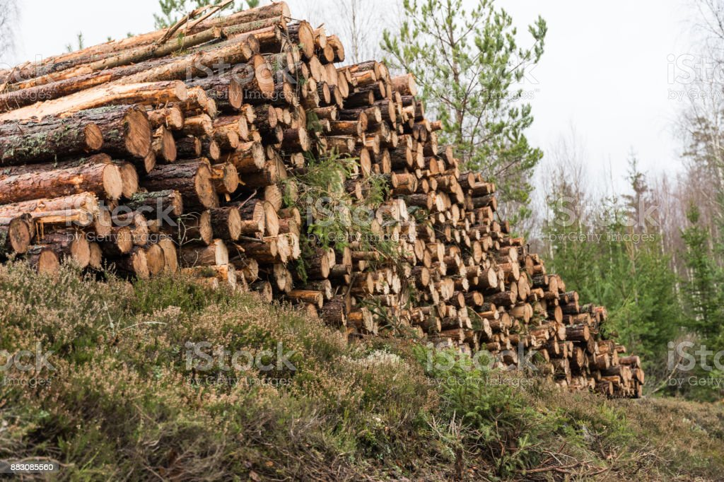 Woodpile in a low angle view stock photo