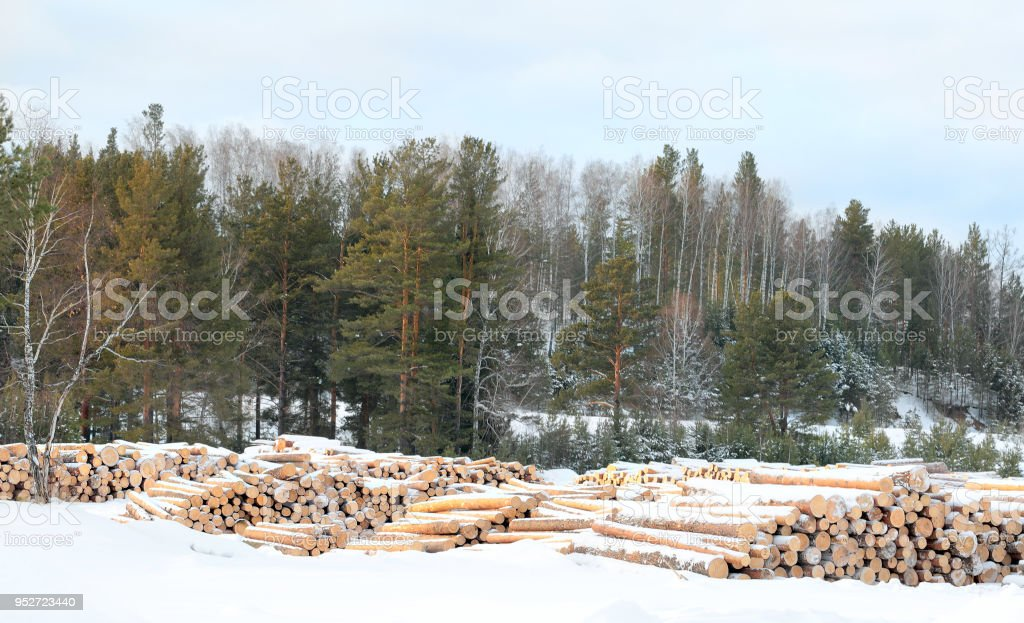 Woodpile of freshly harvested logs. Stacks of cut timber ready to be hauled out of a logging area.  Polluting energies, pollution with smoke a non-renewable energy stock photo