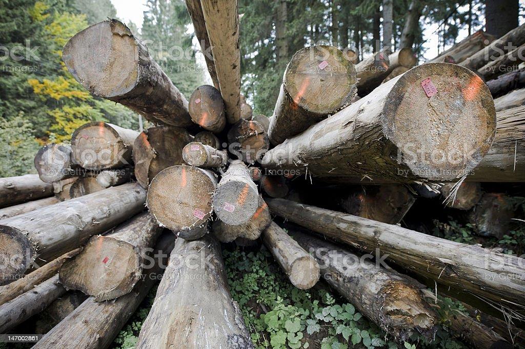 Woodpiles im Wald – Foto