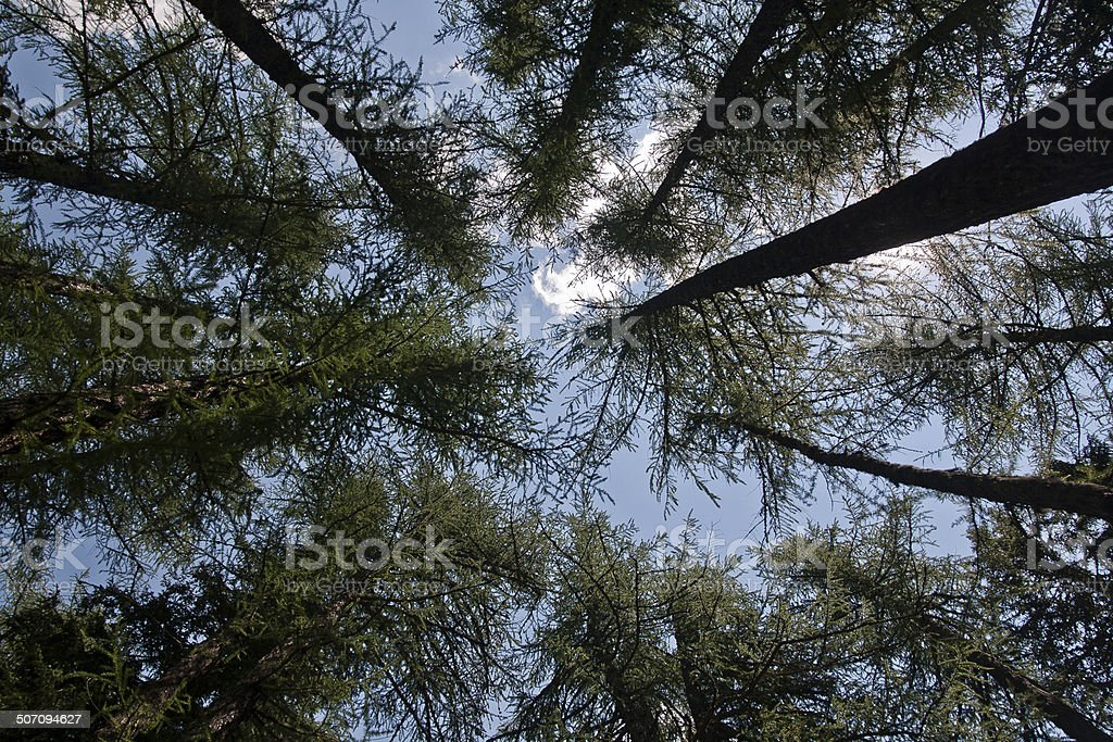 Woods and Sky stock photo