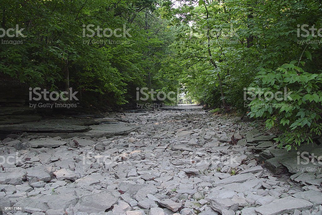 Woods Dry Creekbed stock photo