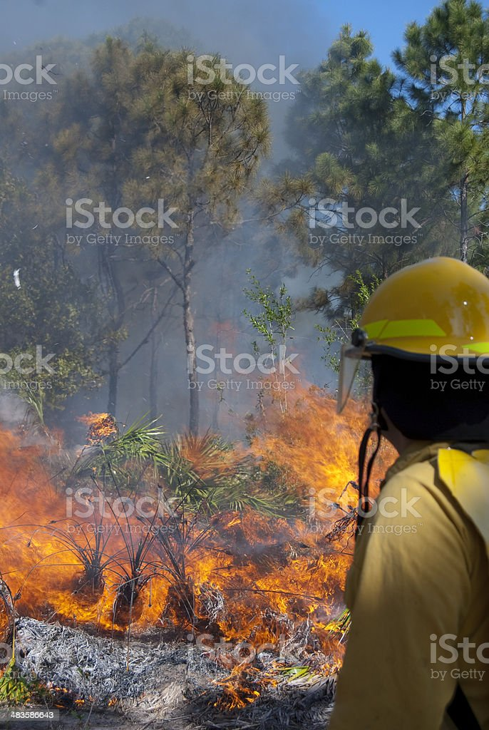 Woods Fire stock photo