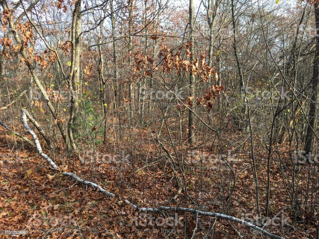 IMG_6004 Woods in Massachusetts stock photo