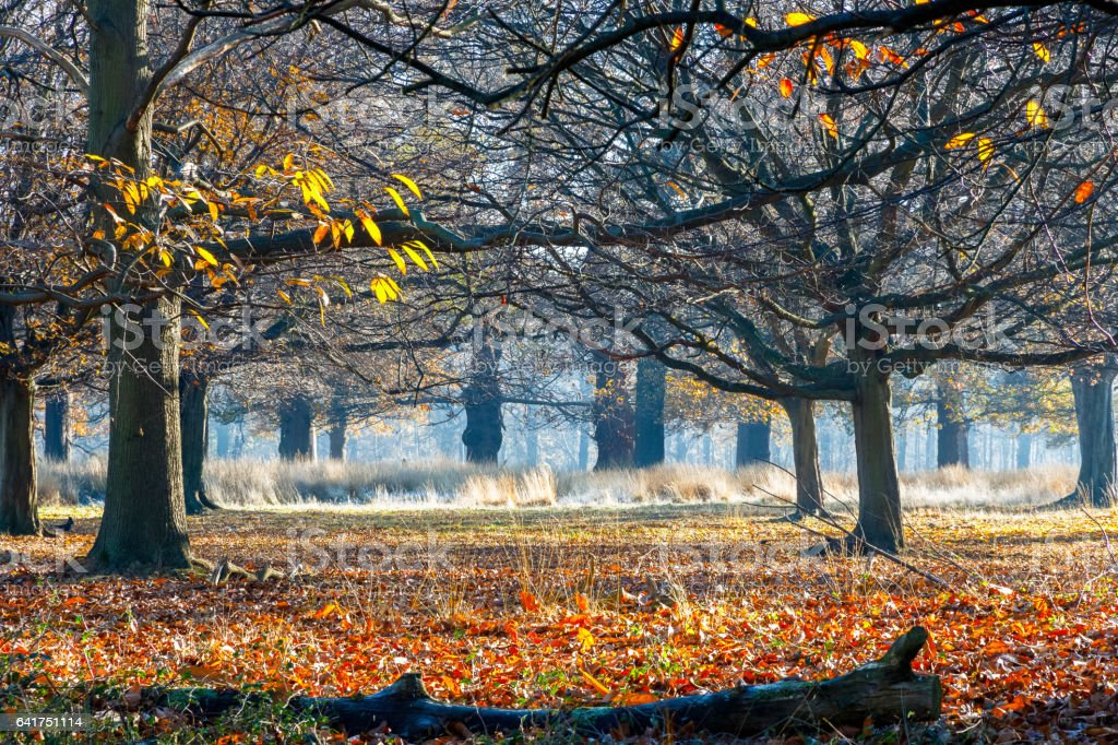 Woods in Richmond Park stock photo