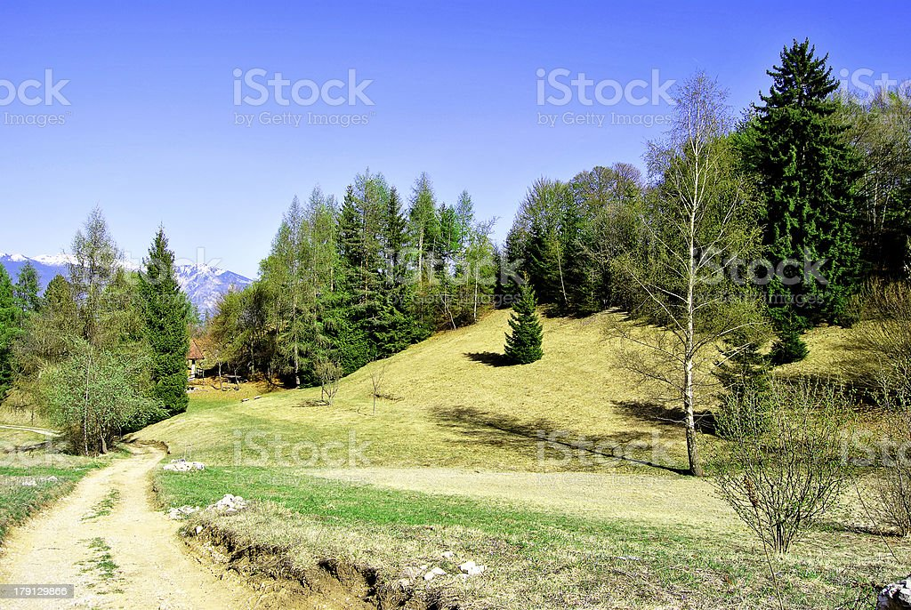 woods in the spring royalty-free stock photo