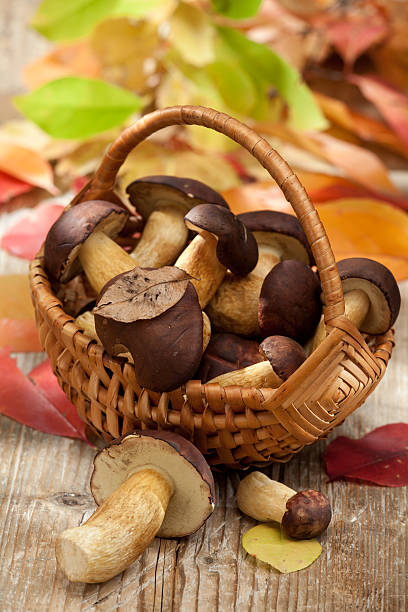 Woods mushrooms in woven basket on wooden table autumn stock photo