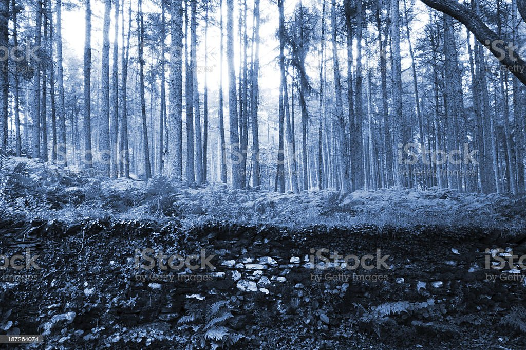 Woods near Grasmere in the English Lake District stock photo