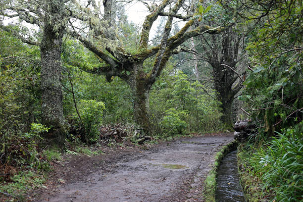 Woods of Levada Caldeireo Verde up in the Hills of Madeira stock photo