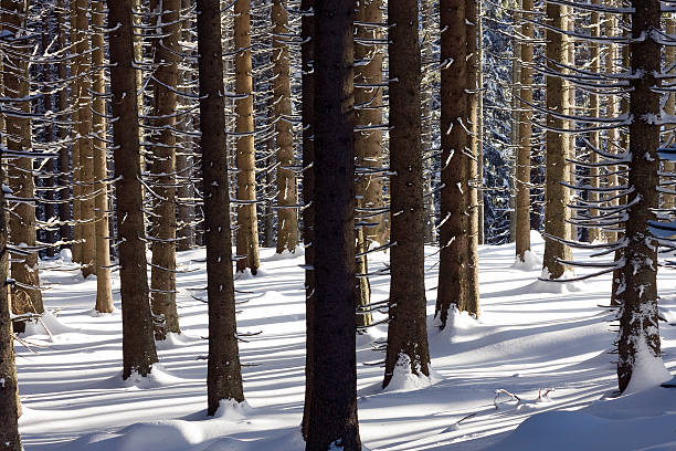woods on wintertime stock photo