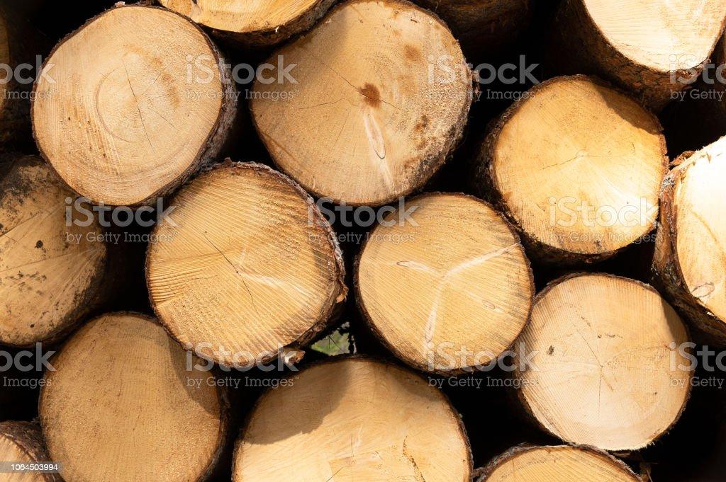 Woods royalty-free stock photo