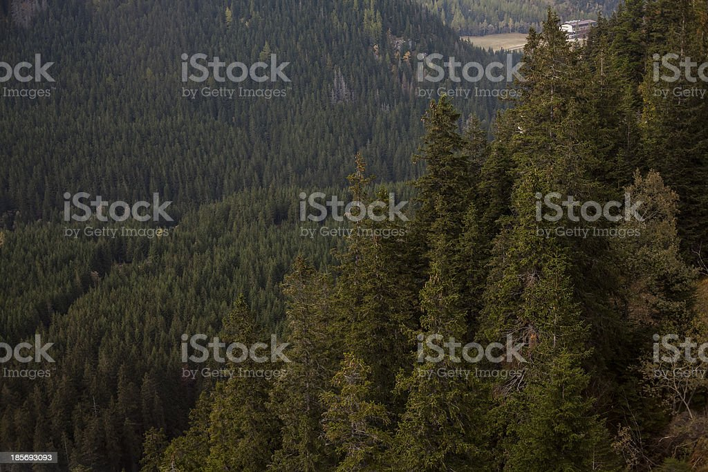 Woods, trees in mountains royalty-free stock photo