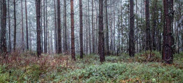woods_6 - waldmalerei stock-fotos und bilder