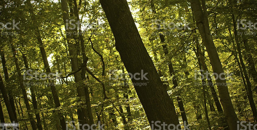 Wood...Stock... royalty-free stock photo