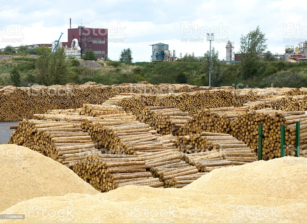 Woodworking in lumber industry - yard of timber stock photo