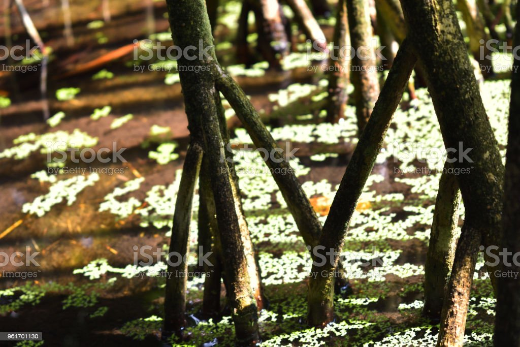 Woody plants in standing water royalty-free stock photo