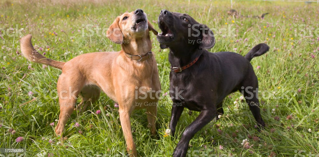 woof! royalty-free stock photo