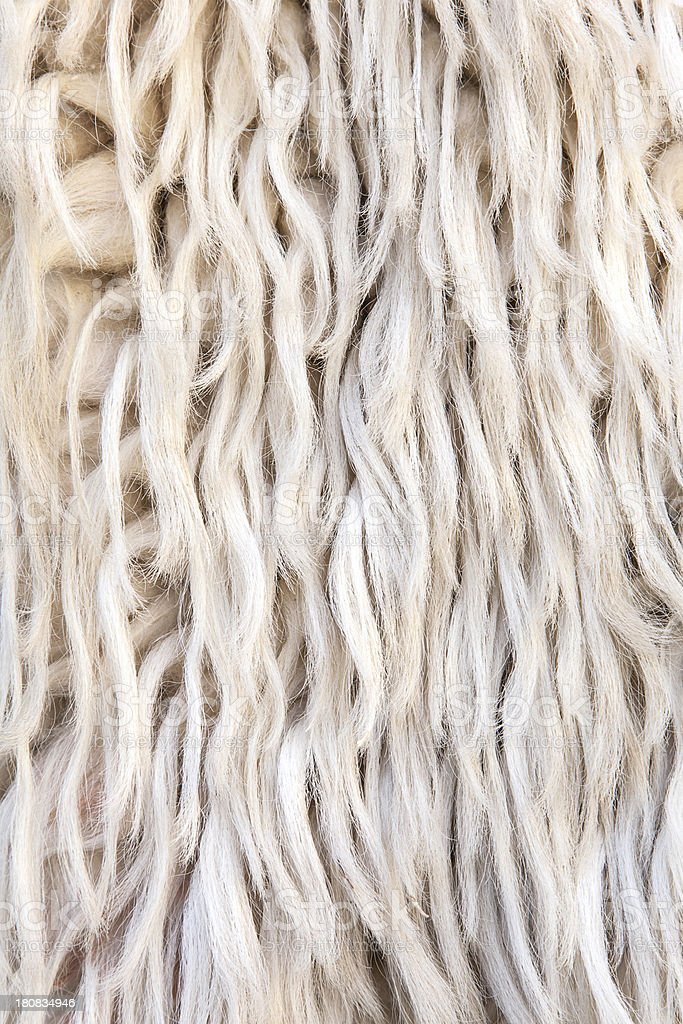 Wool background royalty-free stock photo