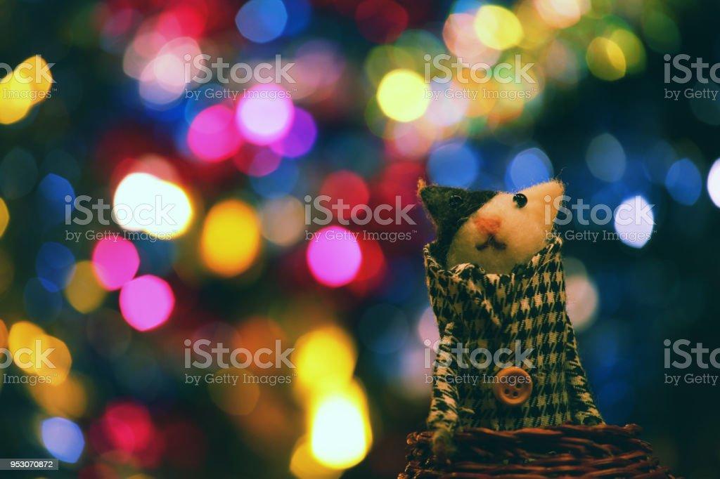 Lanas gato juguete Studio - foto de stock