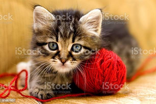 Wool lover picture id91687957?b=1&k=6&m=91687957&s=612x612&h=ahbpglmmylff  d3thnwonjhcm0hm44nnyu6jfwgvfe=